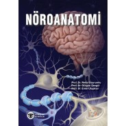 Nöroanatomi