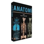 Anatomi - Niyazi Acer