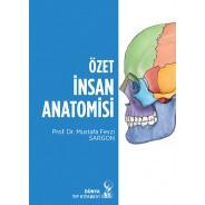Özet İnsan Anatomisi